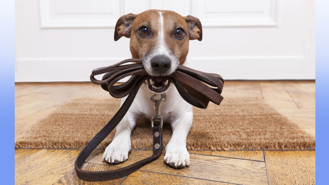 Ten Surprising Truths About Life With Dogs Dog Walking Dogs