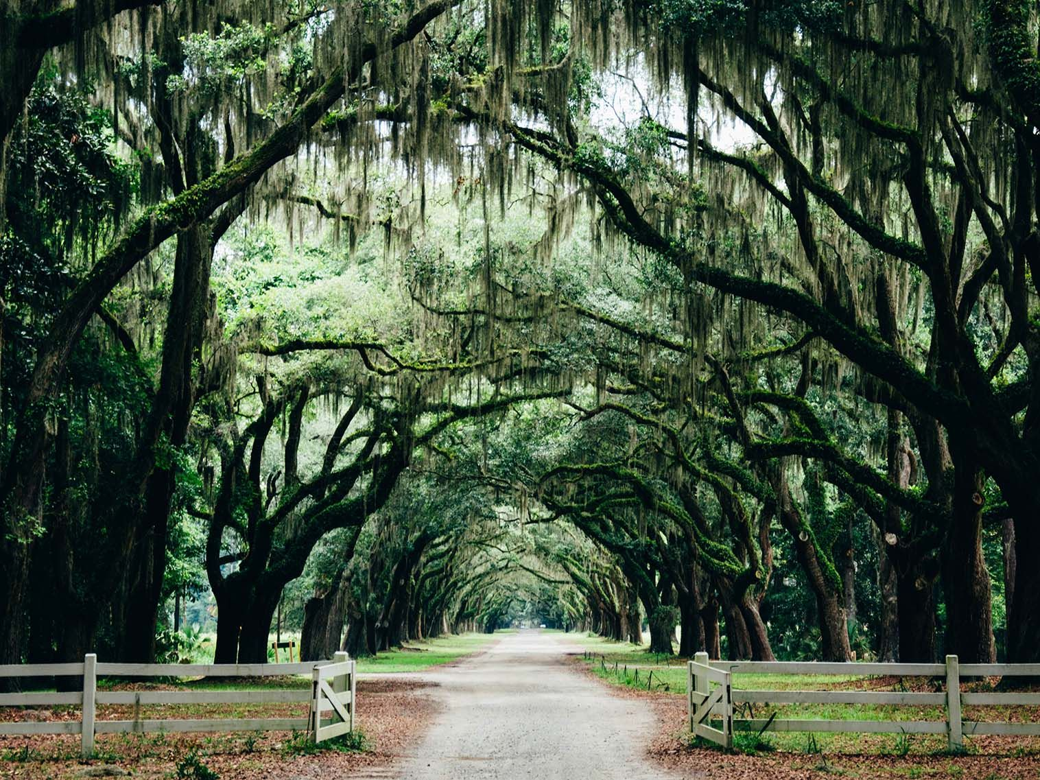 Traveling To Savannah Here S The Only Guide Your Group Will Need Travel Bucket List Usa Travel Usa Places To See