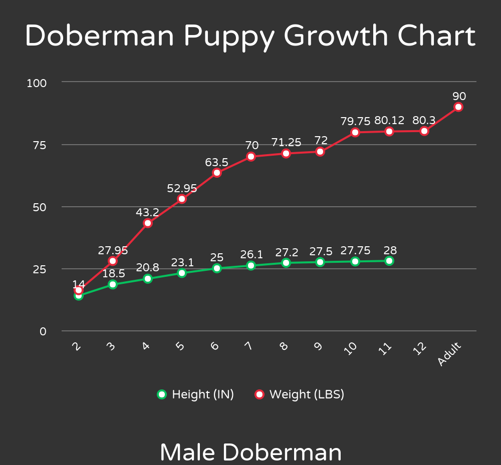 How Many Cups To Feed A Doberman Puppy The Pet Supply Guy Doberman Puppy Doberman Puppy Growth Chart
