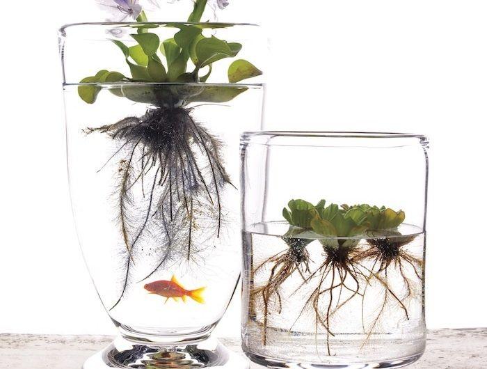 plante aquatique dans un bocal
