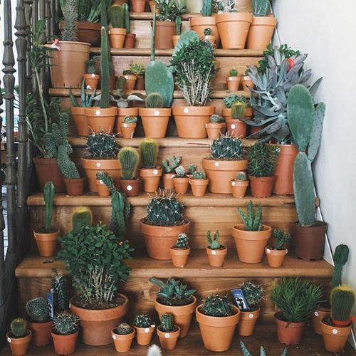 At Arizona Pottery We Want To Be The Largest Supplier Of Real Clay Flowerpots Planters Garden Containers Ariz Plants Planting Flowers Cacti And Succulents