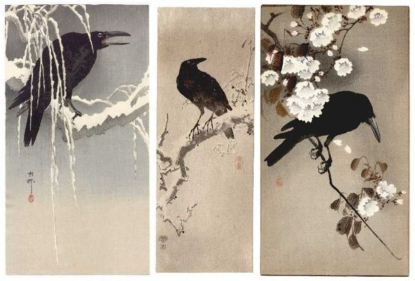 Japanese black bird