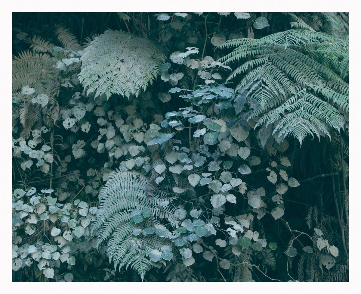 Widewhitestairs Adam Custins Photo To Art Flowers Nature
