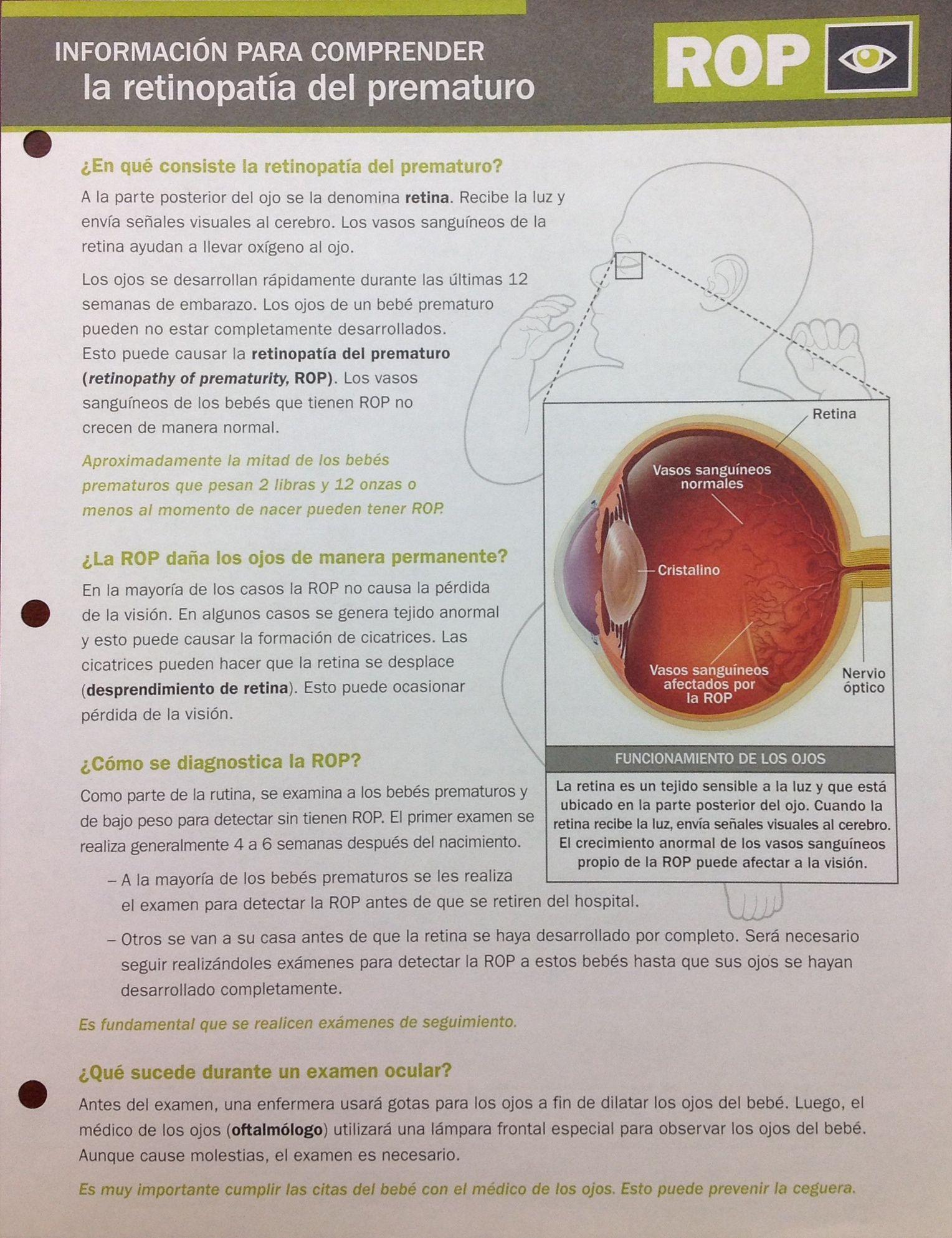 informacion para comprender la retinopatia del prematuro | anatomía ...