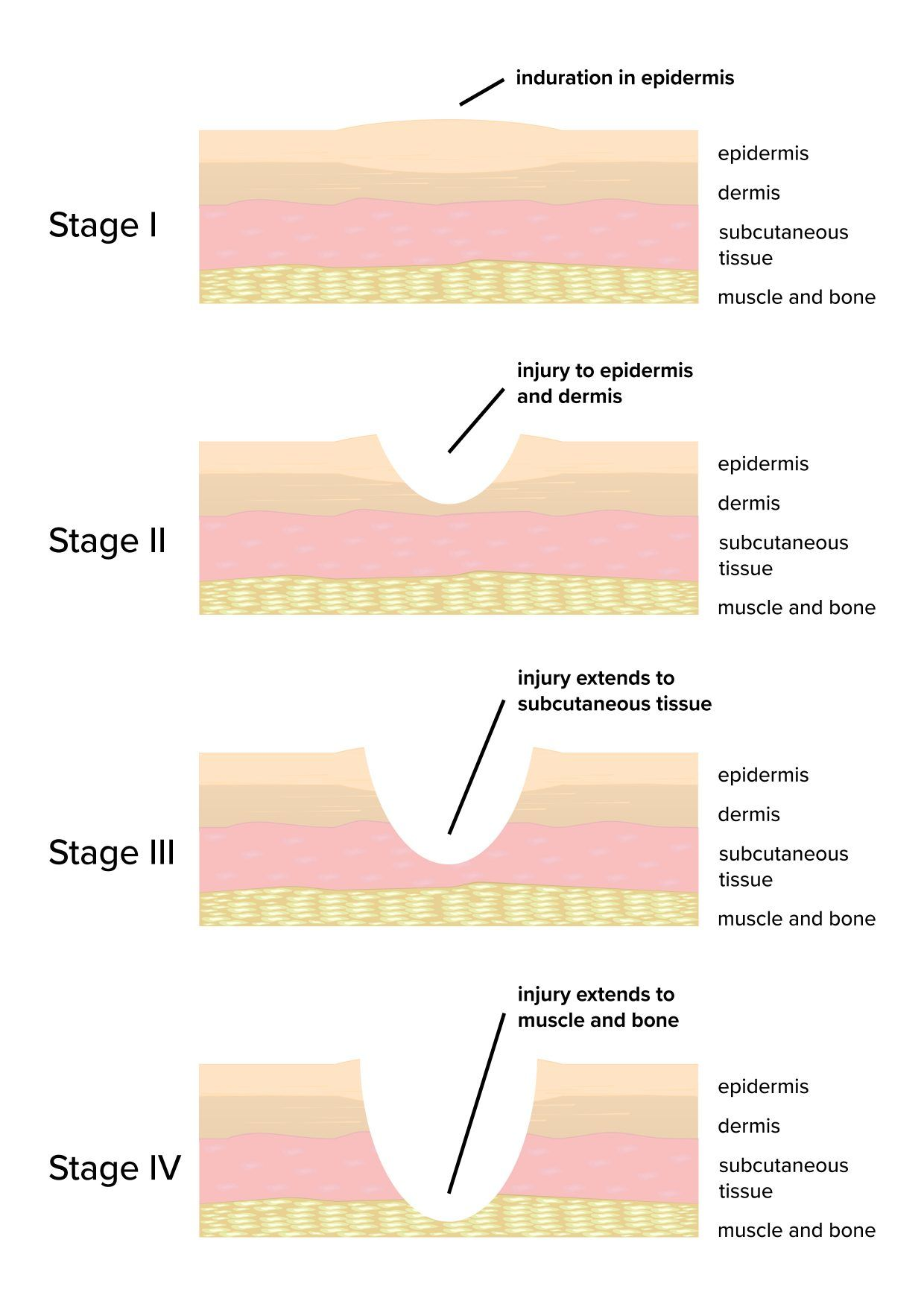 Schematic Overview Of Wound Healing Focused On The Major Manual Guide