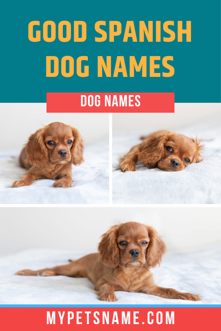 While Choosing A Spanish Name For Your Pup It S Also Important To Understand What Those Words Mean And It S Only Bett In 2020 Dog Names Cool Pet Names Best Dog Names