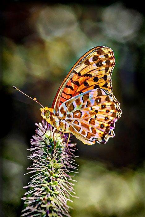 Artwork Acrylic(Plexiglass) 3D HD contemporary Colorful Butterfly digital artwork painting nature, flower, garden, summer