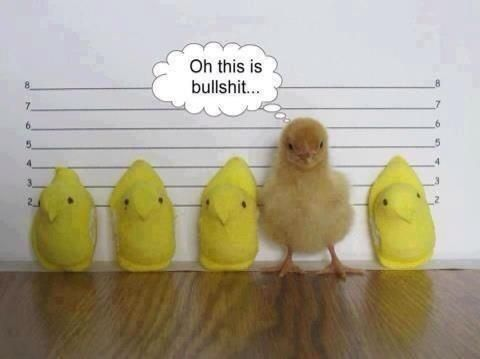 Easter chicks and peeps
