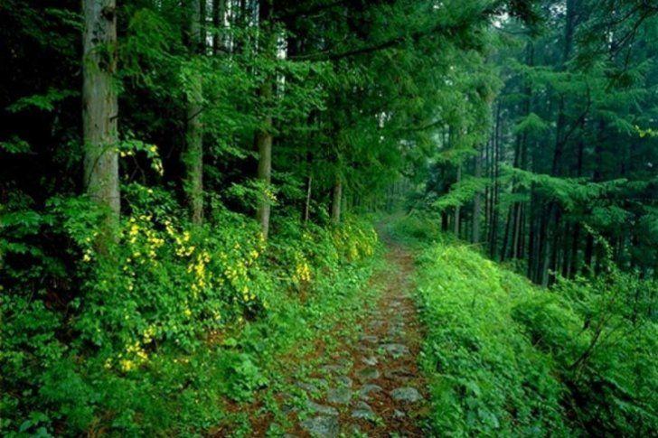 Esta conmemoración tiene como objetivo formentar acciones constantes y acordes, orientadas a lograr un manejo adecuado de los bosques.</p> <p>Este día fue fue establecido en 1999 por el Pnuma (Programa de las Naciones Unidas para el Medio Ambiente), WWF (la organización mundial de conservación) y la Unesco (Organización del as Naciones Unidas para la Educación, la Ciencia y la Cultu...