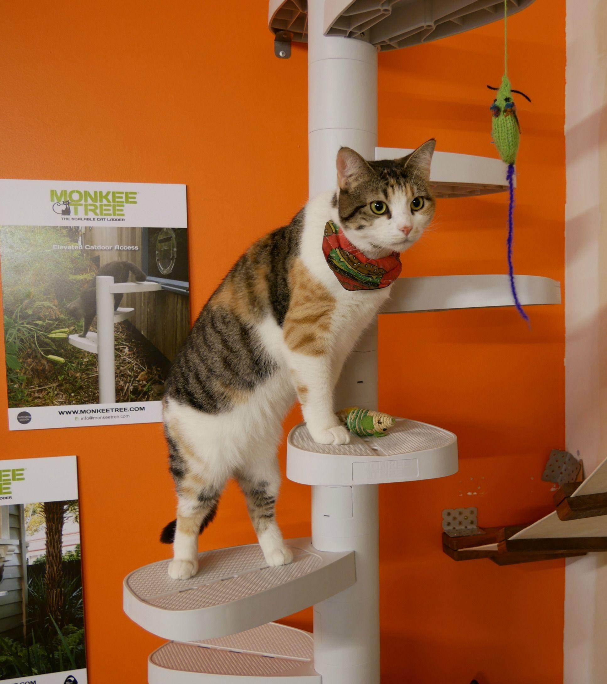 Hamburglar At Barista Cats Cafe Auckland Nz Chat
