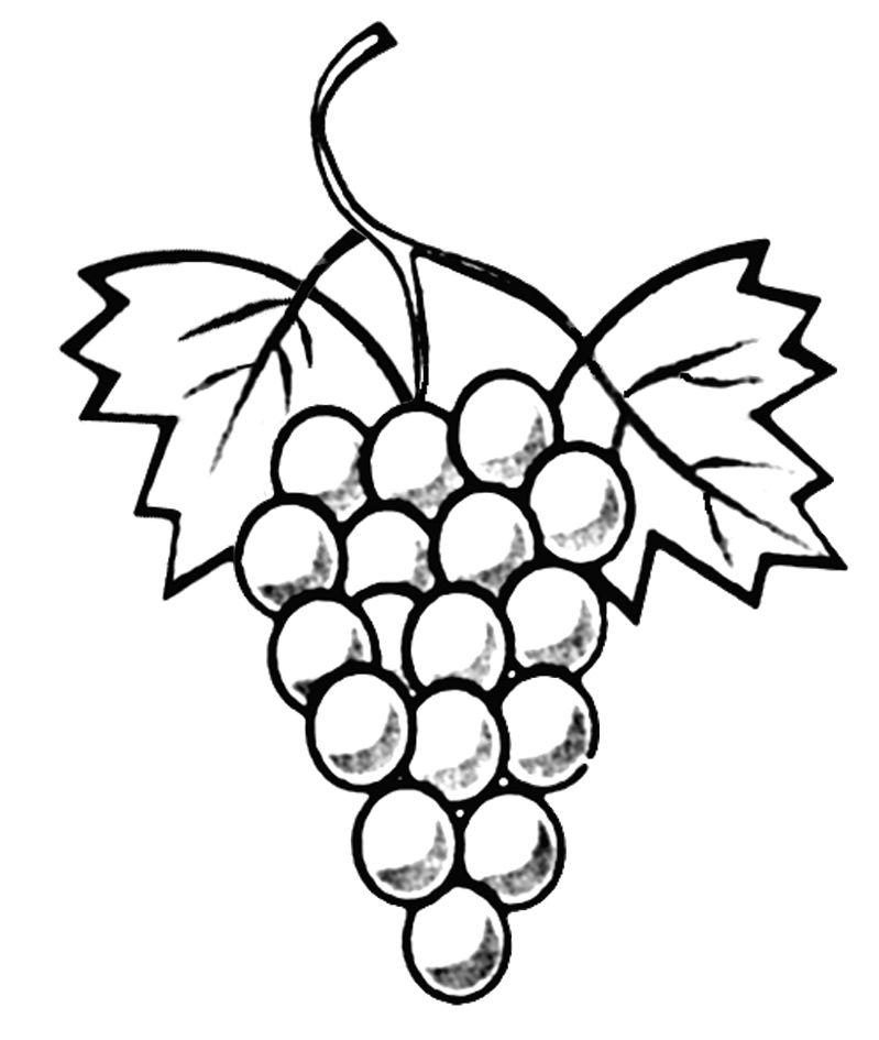 Coloriage grappe de raisin sciences de la terre grappe de raisin coloriage et coloriage - Feuille de vigne dessin ...