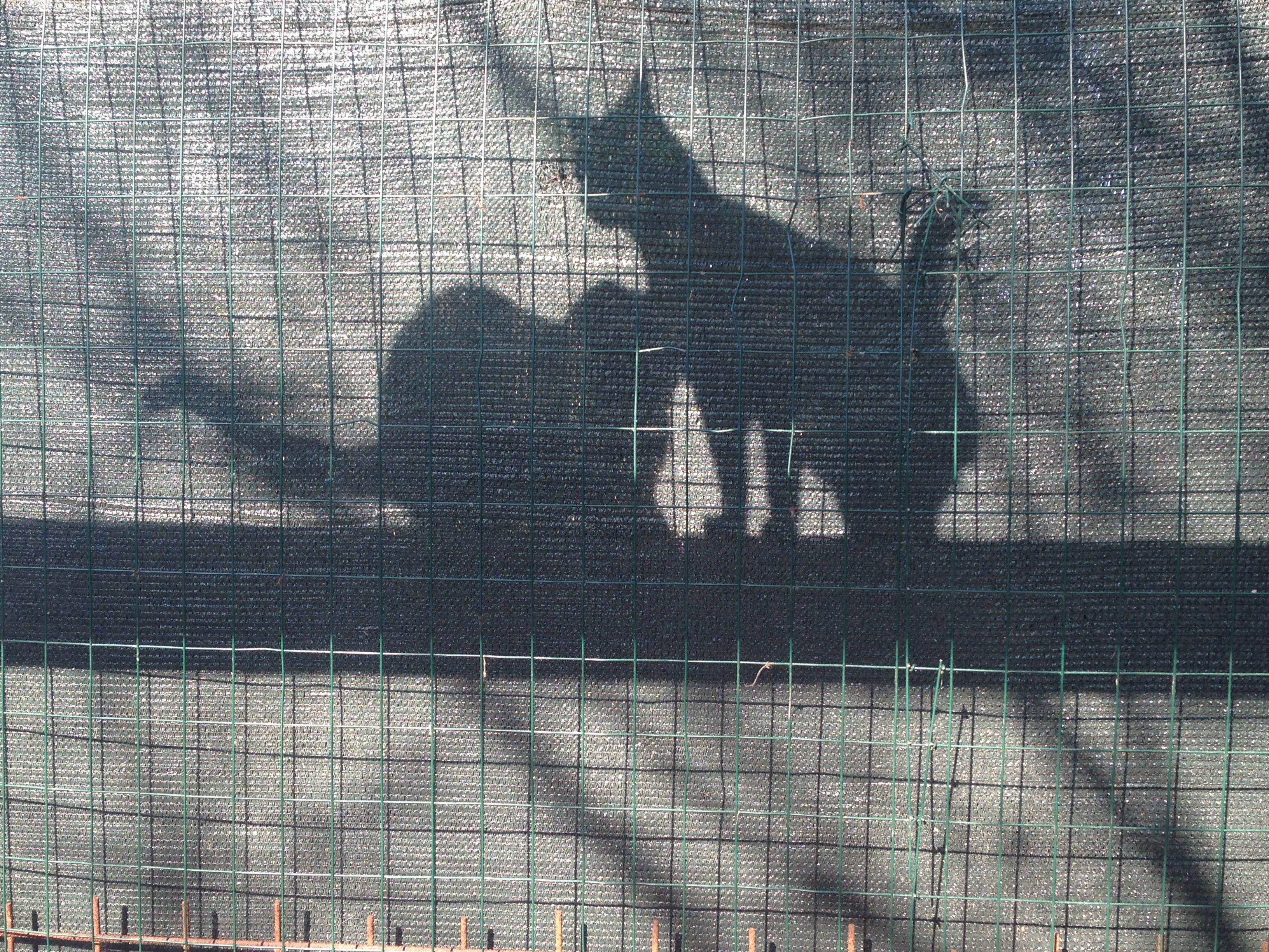 Gatti: luci e ombre