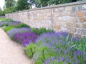 vorgarten mit lavendel – reimplica, Garten und Bauen