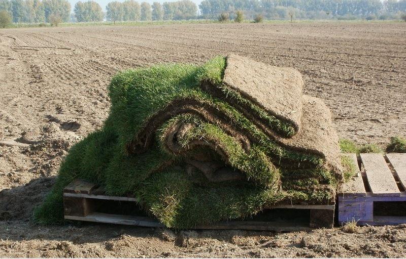 Grass Sod for Sale Near Me Find the Best Sod Farms Near