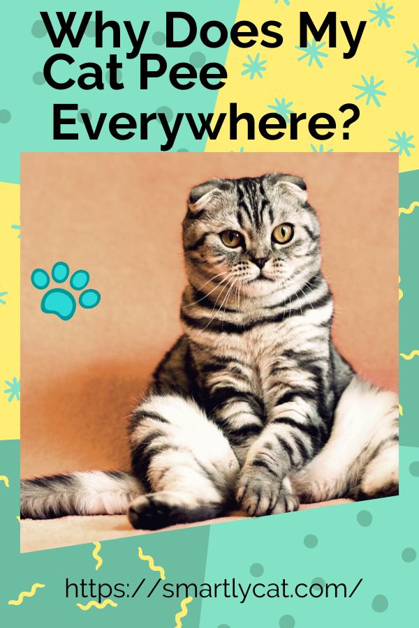 Cat Piss Not Inwards Box