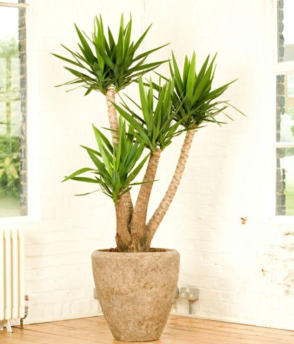 Tolle Yucca Palme In Dem Zimmer Im Grossen Topf