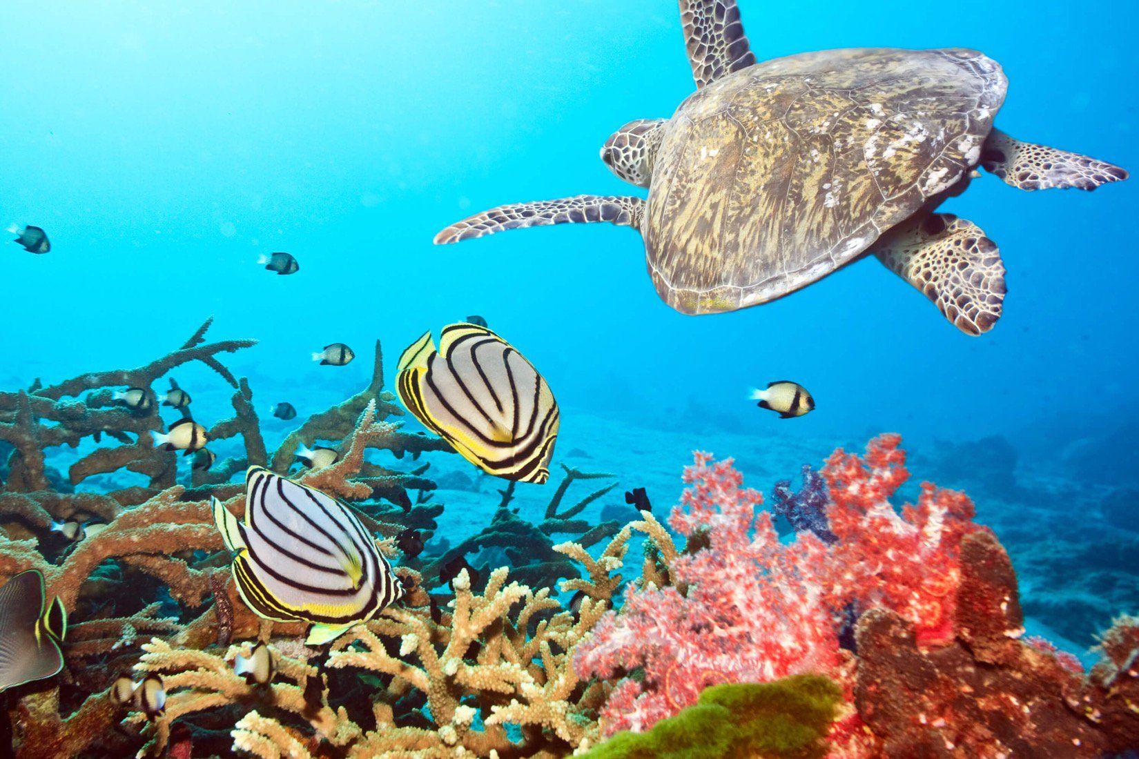 Animal Wallpaper Wildlife Wallpaper Murals Wallpaper Sea Turtle Wallpaper Underwater Animals Animal Wallpaper