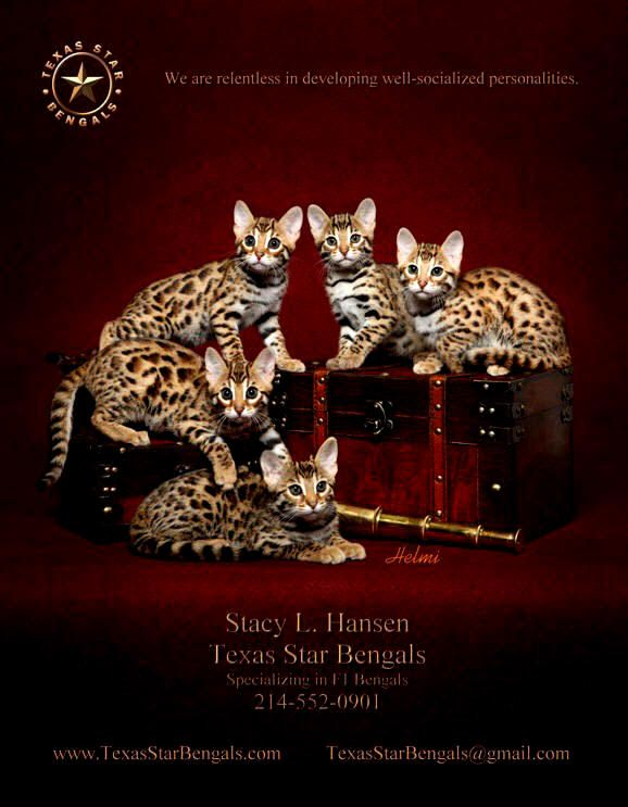 Texas Star Bengals TICA REGISTERED BENGAL CATS KITTENS FOR