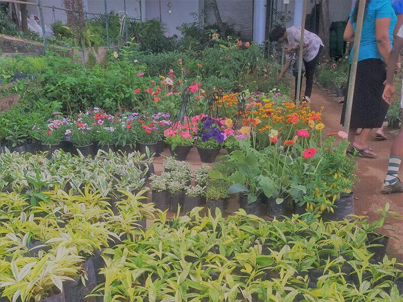 Plant Nursery My Location Polwatta