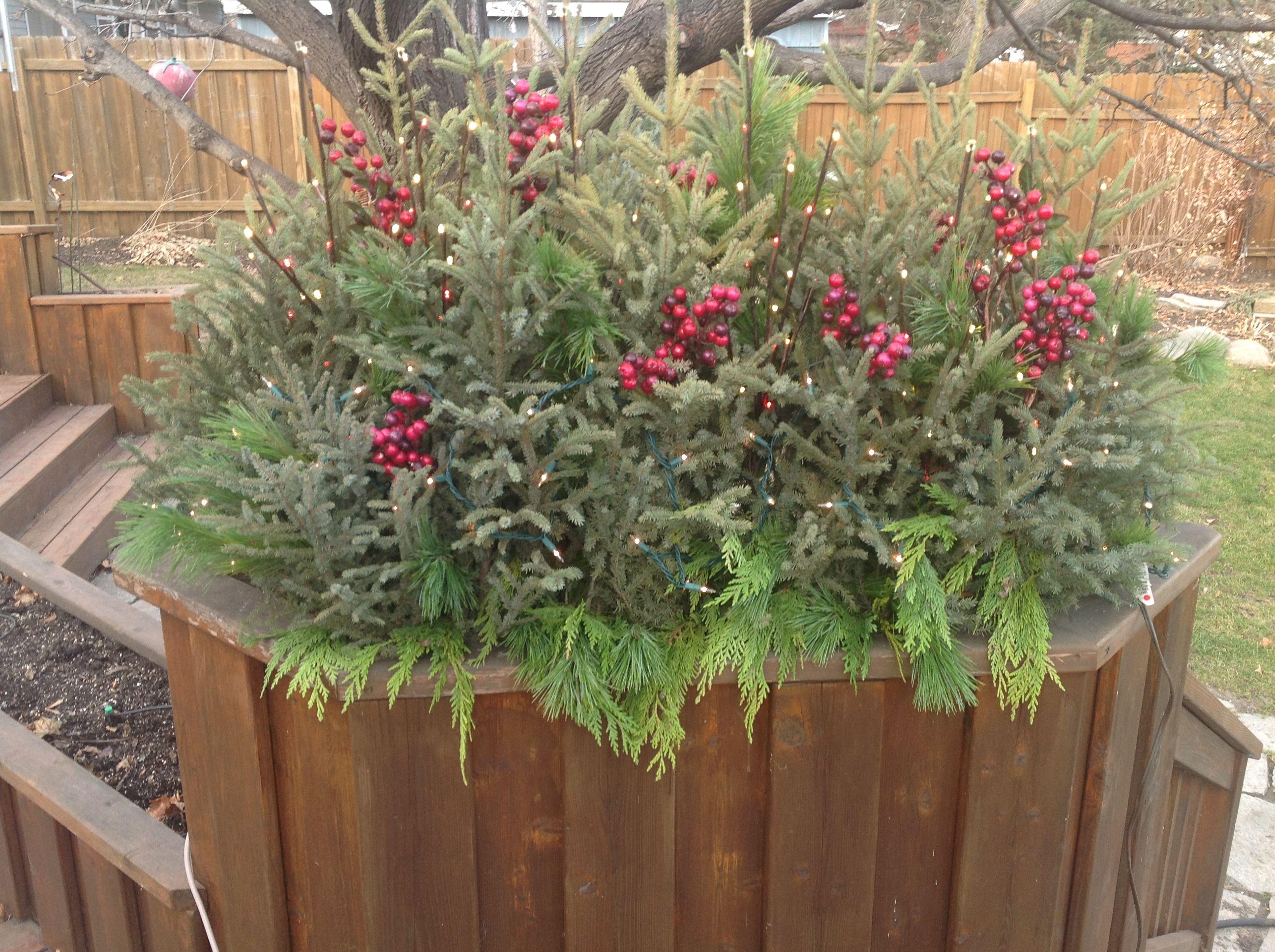 Winter Gardening is the best no watering:-)))