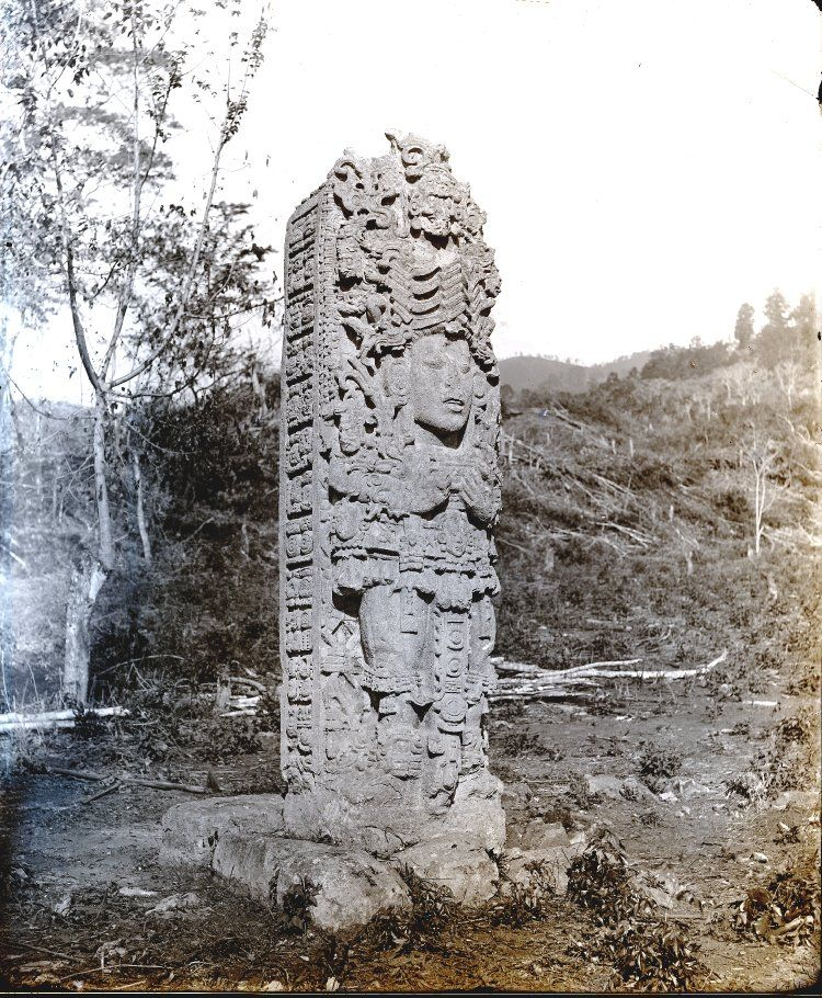 Left and front view of Stela A; north side of the Great Plaza. Copán, Honduras. Photographed by Dr Alfred Percival Maudslay in 1890-1891. -British Museum-
