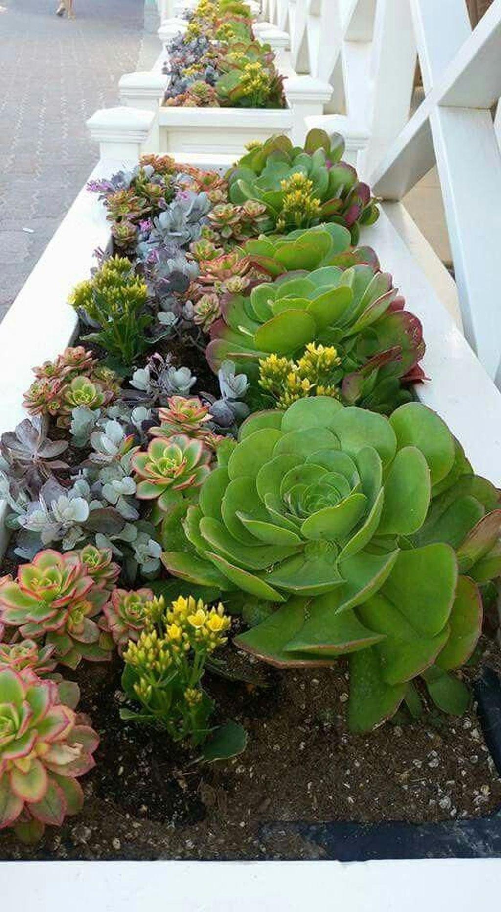 50 Gorgeous Succulent Garden Ideas For Your Backyard Succulent Garden Design Succulent Garden Landscape Succulent Landscape Design
