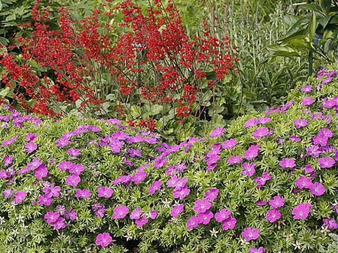 Qu 39 est ce qu 39 une plante vivace plante vivace vivace - Plante couvre sol vivace ...