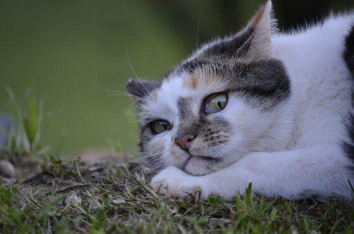 Kissa, Väijyvä, Luonto, Kesällä