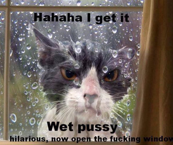 Image result for wet cat funny