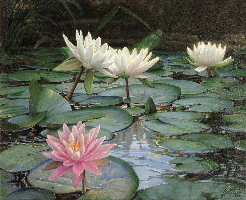 Annette Hodges   Цветочные картины, Краска, Кувшинки