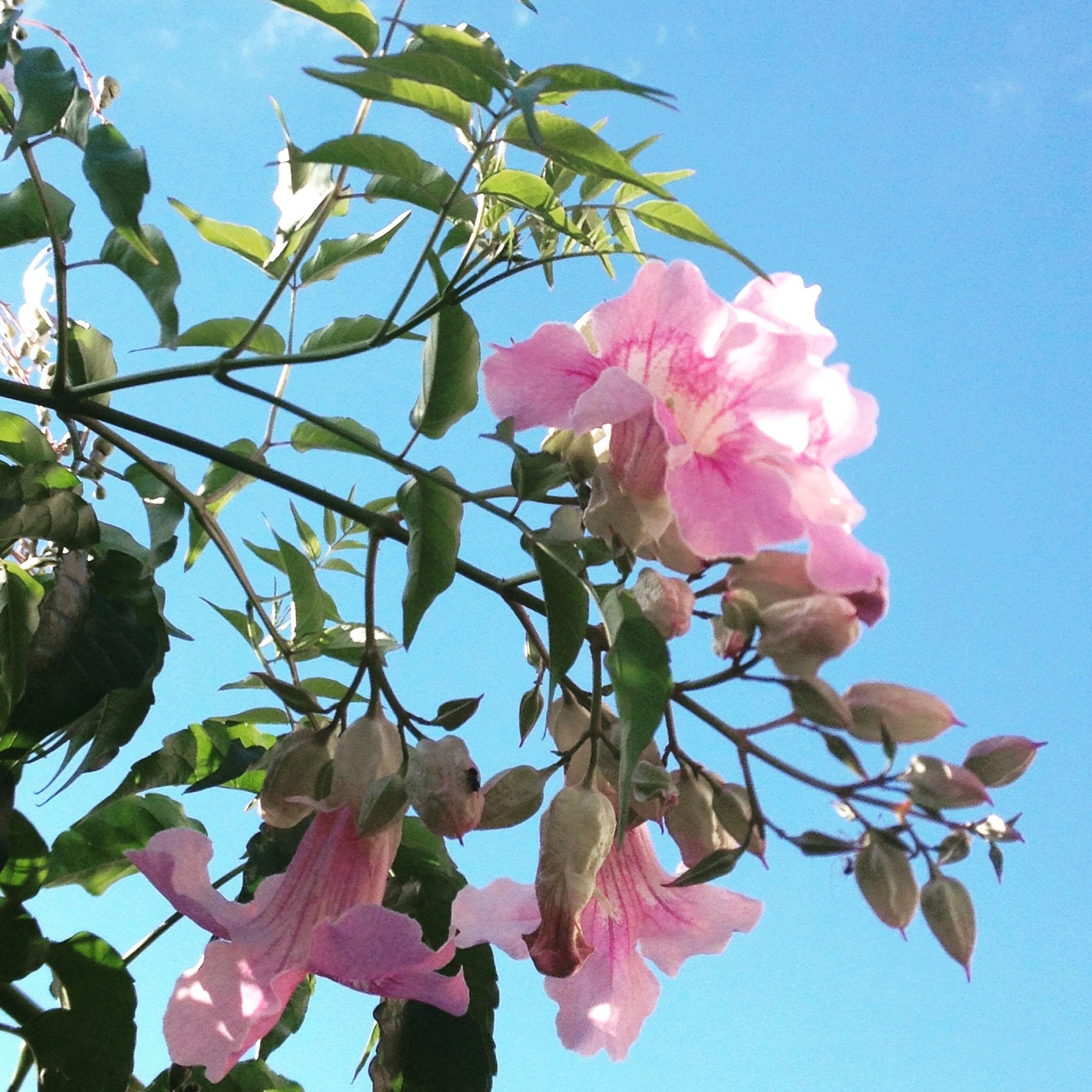 Verde e Rosa num Céu Azul - Foto de Malú Antunes