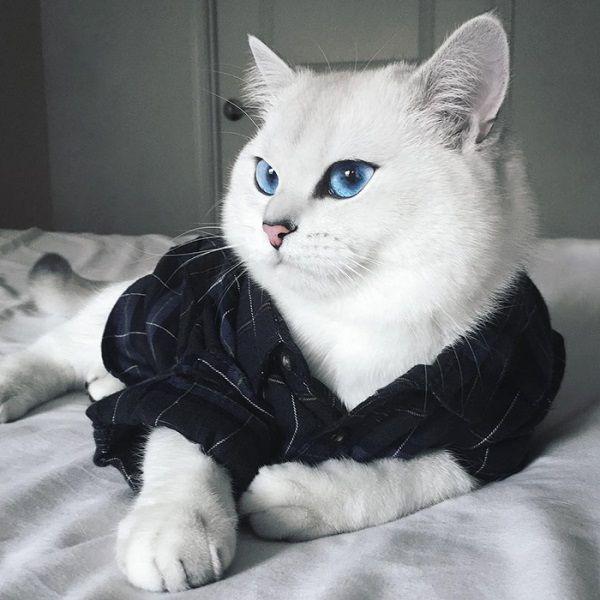 Soái ca mèo đốn gục trái tim các thiếu nữ bằng đôi mắt trong