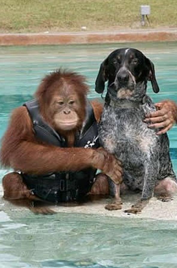 Myrtle Beach Zoo Orangutan