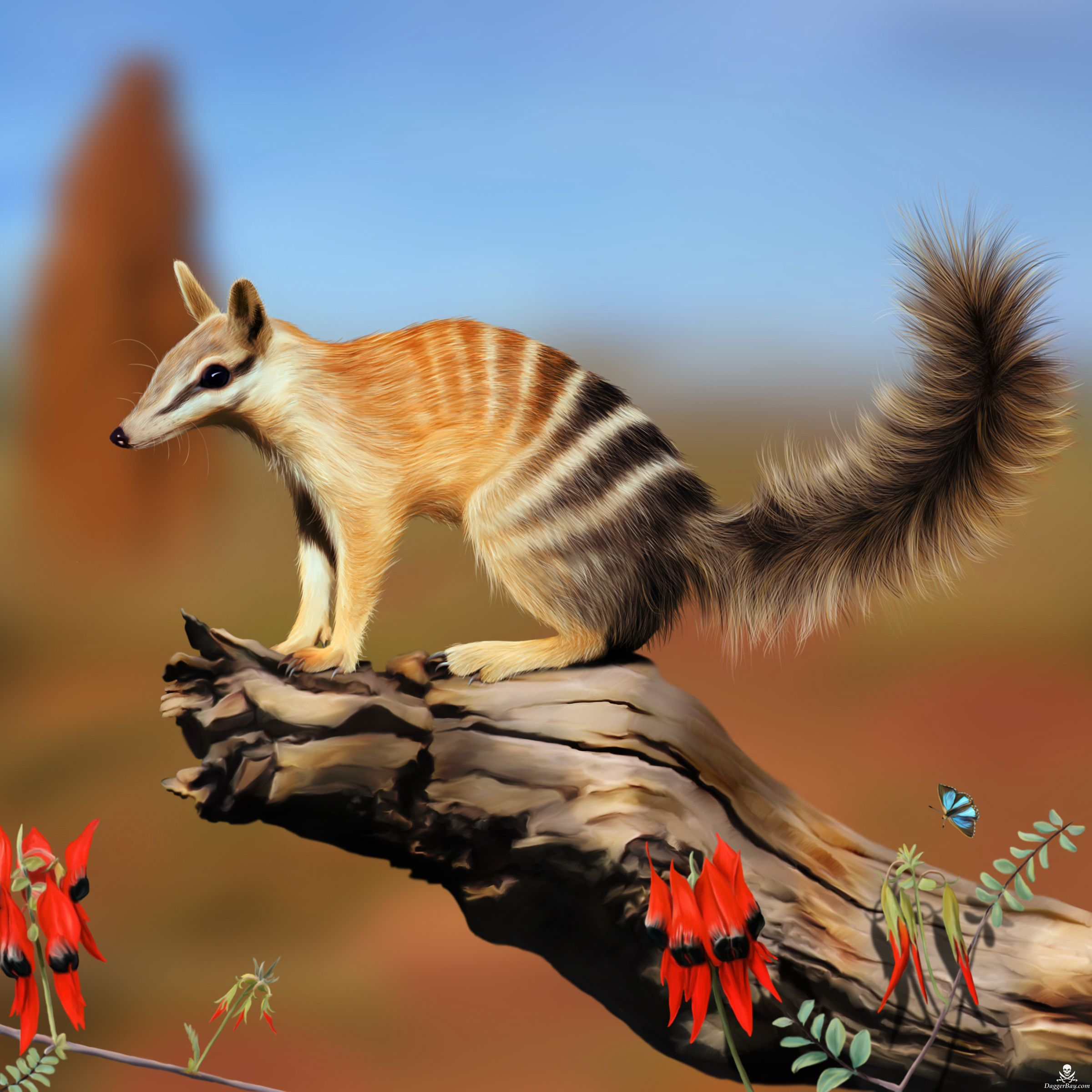 Numbat Photo By Pamelap A Numbat Is A Small Sized Marsupial