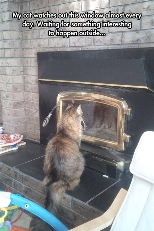 Cat Window Funny Animals Funny Animal Memes Funny Animals With Captions