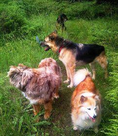 Ottawa Valley Dog Whisperer : Bladder, Kidney Stones in Dogs, Cats - Types, Symptoms, Diet, Treatment