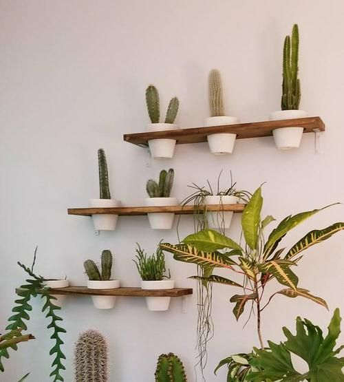20 Eye Catching Plant Shelves Ideas