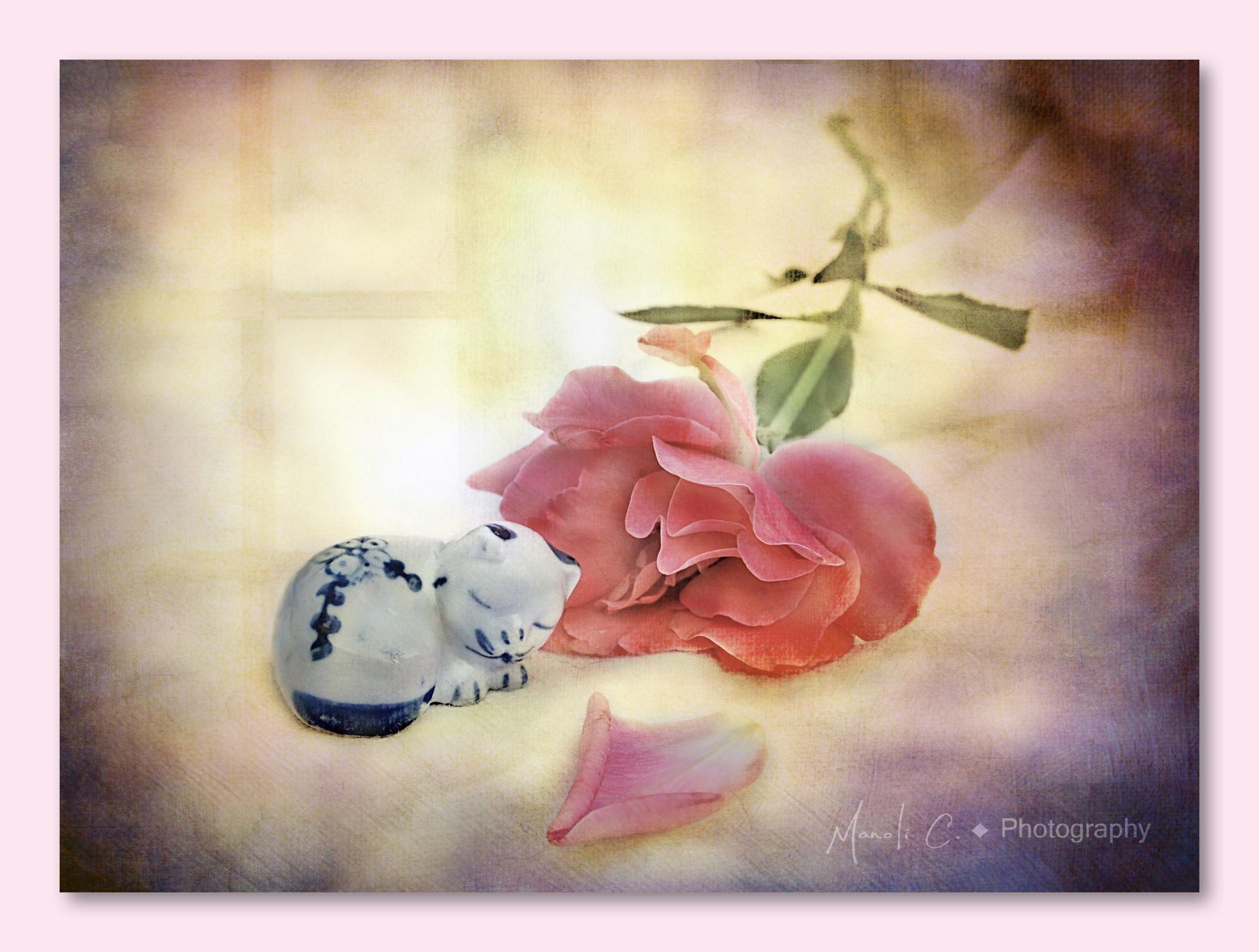El gato que está triste y azul - ♫ Cuando era un chiquillo que alegría jugando a la guerra noche y día saltando una verja verte a ti y asi en tus ojos algo nuevo descubrir Las rosas decían que eras mía y un gato me hacía compañia desde que me dejáste yo no se porqué la ventana es más grande sin tu amor  El gato que esta en nuestro cielo no va a volver a casa si no estás no sabes mí amor que noche bella presiento que tu estas en esa estrella  El gato que está triste y azul nunc...