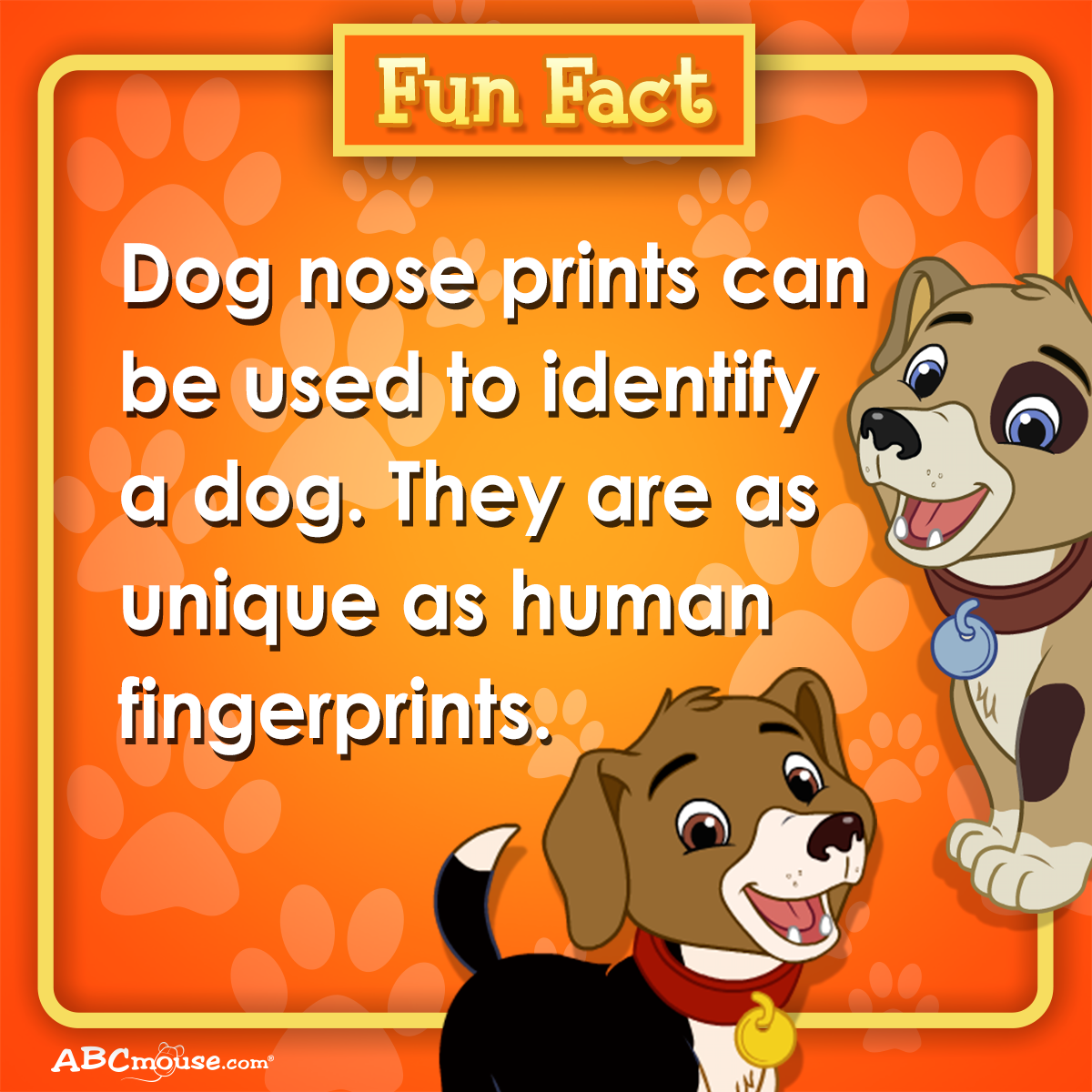 Fun Fact Dog Nose Prints Can Be Used To Identify A Dog