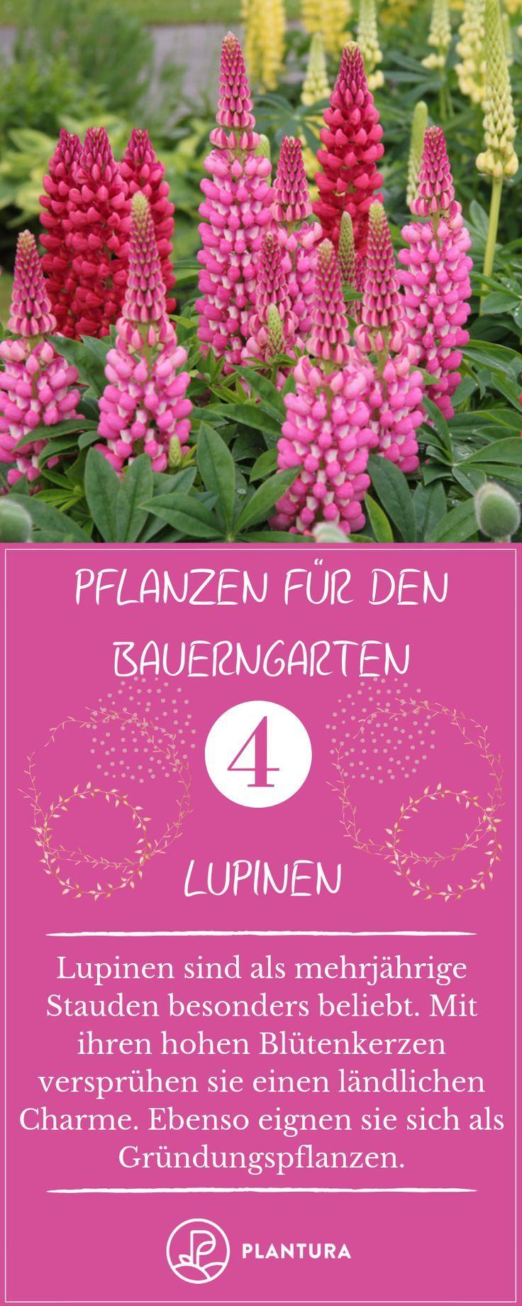 Bauerngarten: Die besten Pflanzen & Tipps zum Anlegen - Plantura #cottagegardens