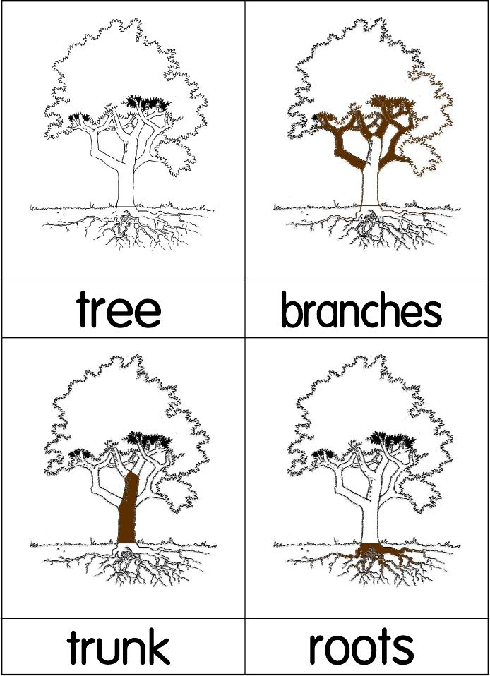 Tree Nomenclature Cards