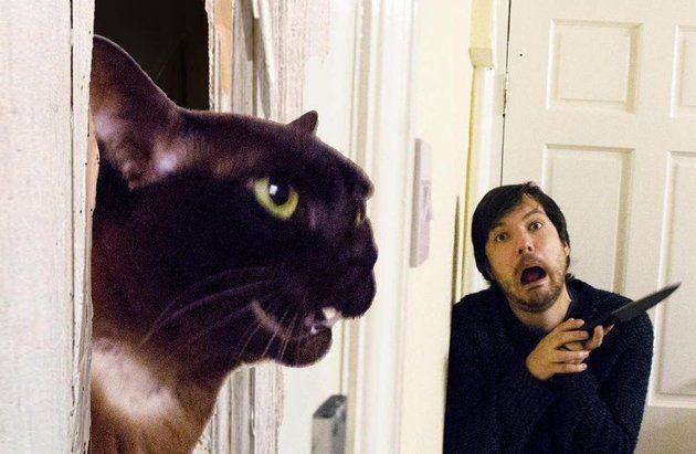 Dude Recreating Movie Scenes With His Cats Is Purr-fection