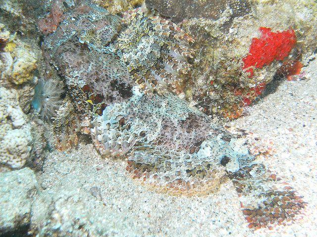 foto para bucear submarinismo