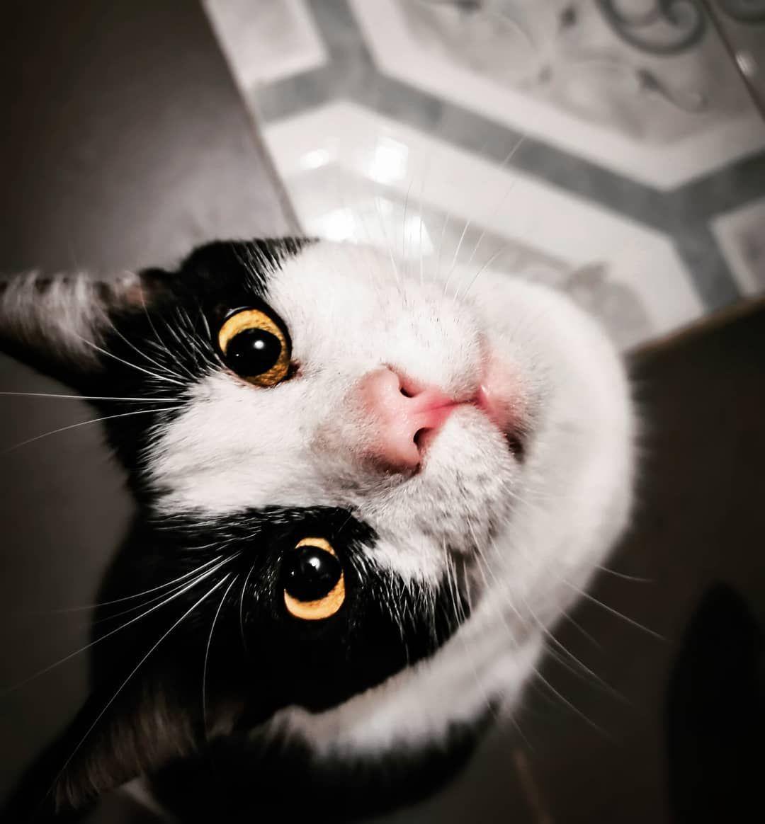 Una mirada de hambre  Mi Gatijo