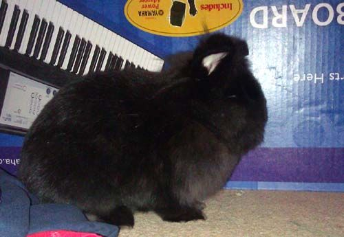 My name is Pascha.  To adopt me, contact  rabbit8.mary@gmail.com