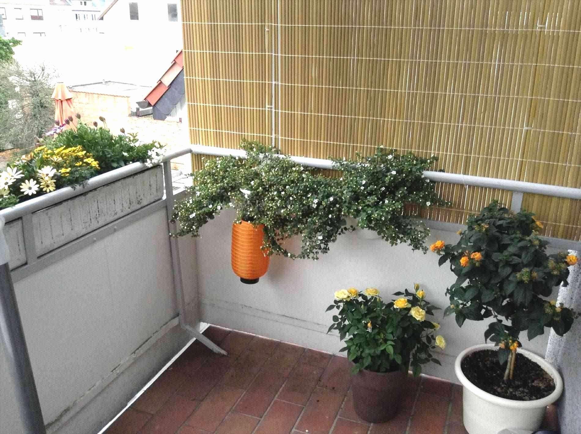 Konzept 44 Fur Angerer Balkon Sichtschutz Check More At Https