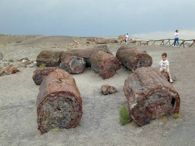 Sat on this Petrified log. Evidence of the Great FLood from Scriptures. Petrified Forest, AZ