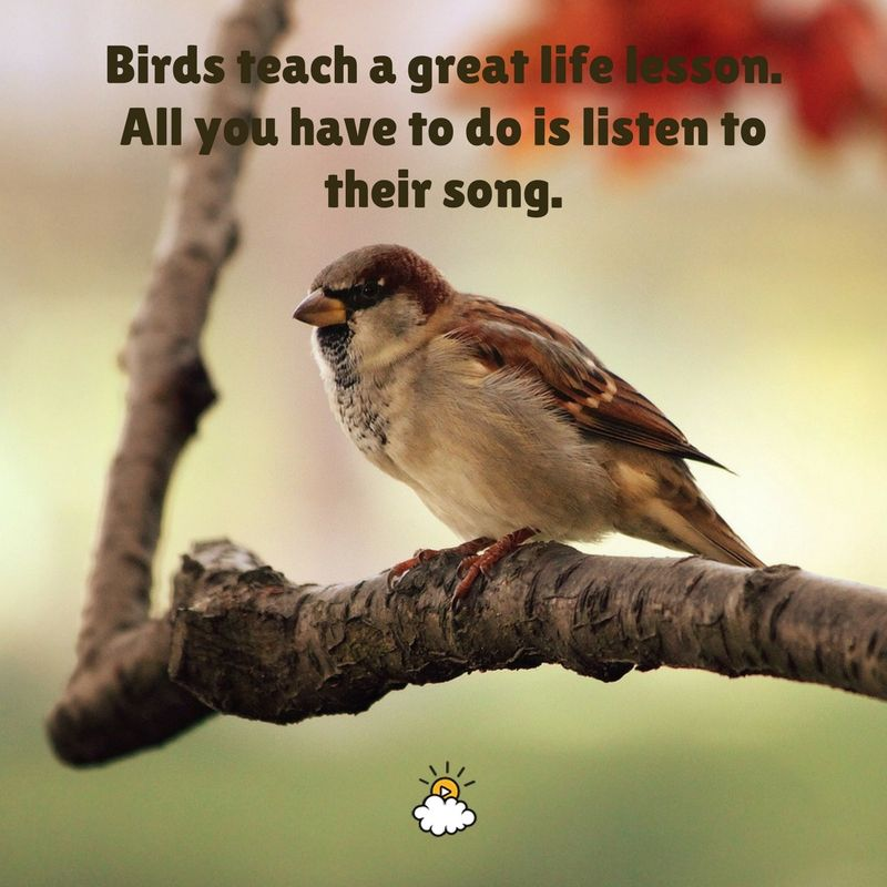 """""""Birds Teach A Great Life Lesson. All You Have To Do Is"""
