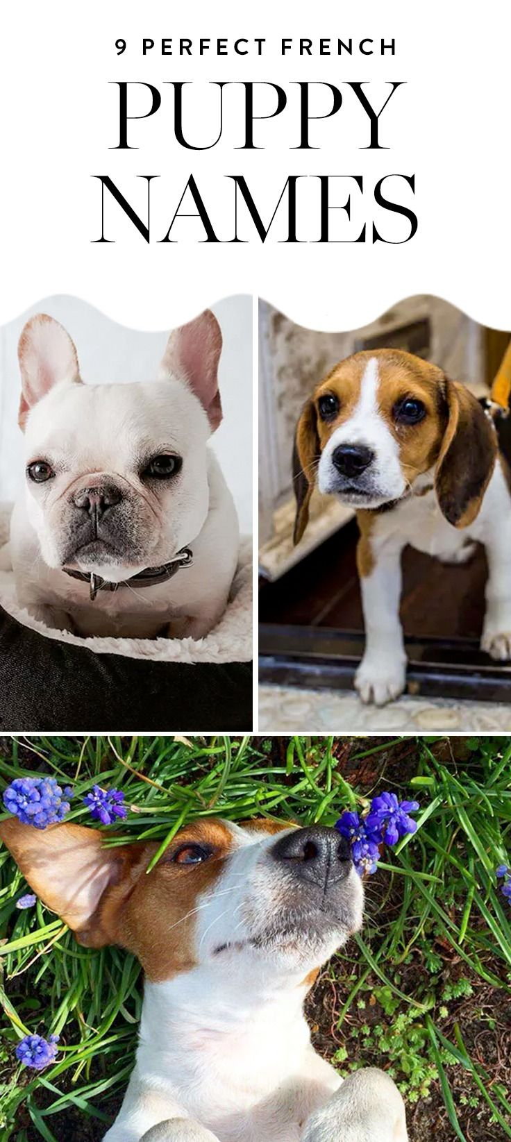 9 French Puppy Names That Are Perfect for Your Adorable