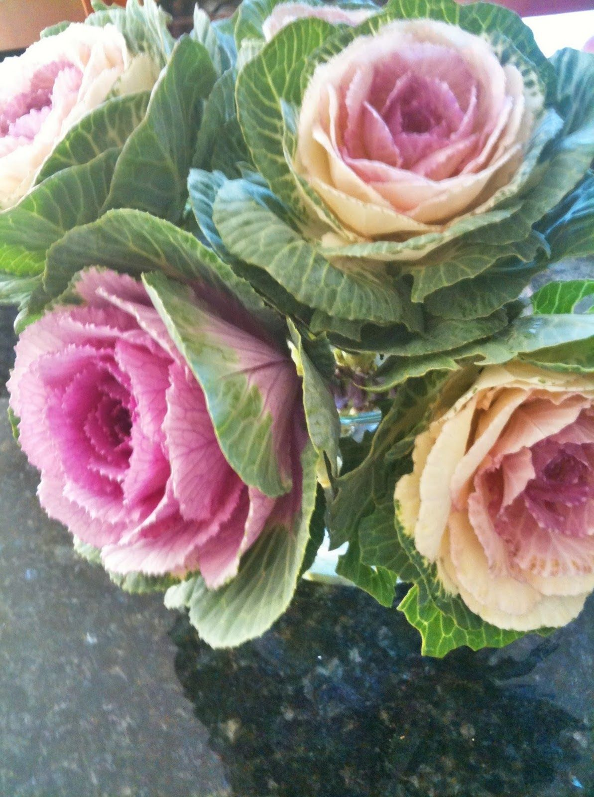 Cabbage Roses Flower Farmer Ornamental Cabbage Ornamental Plants